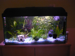 verwandte suchanfragen zu aquarium 60l welche fische. Black Bedroom Furniture Sets. Home Design Ideas